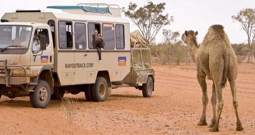 Goanna Dreaming Safari