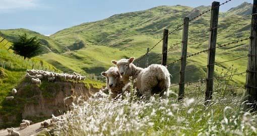 New Zealand Farmstays