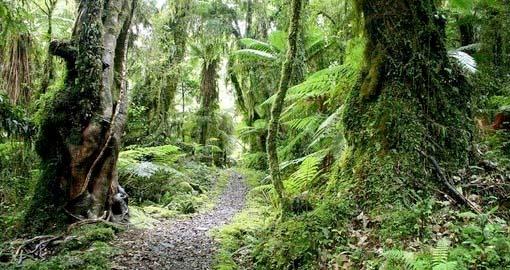 Hollyford Wilderness Journey